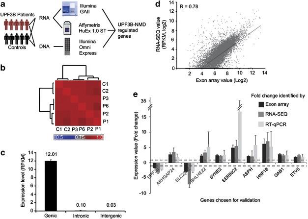 Transcriptome profiling of UPF3B/NMD