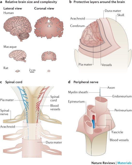 Materials And Technologies For Soft Implantable Neuroprostheses Nature Reviews Materials Limited time sale easy return. soft implantable neuroprostheses