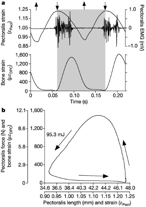 bird flight diagram comparative power curves in bird flight nature  comparative power curves in bird flight