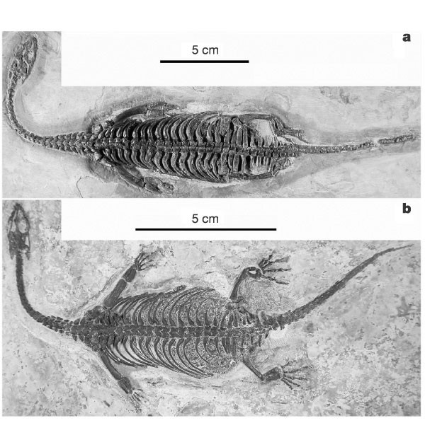 Triassic marine reptiles gave birth to live young