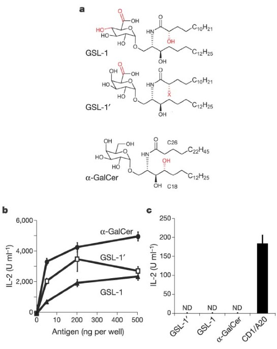 Recognition Of Bacterial Glycosphingolipids By Natural Killer T