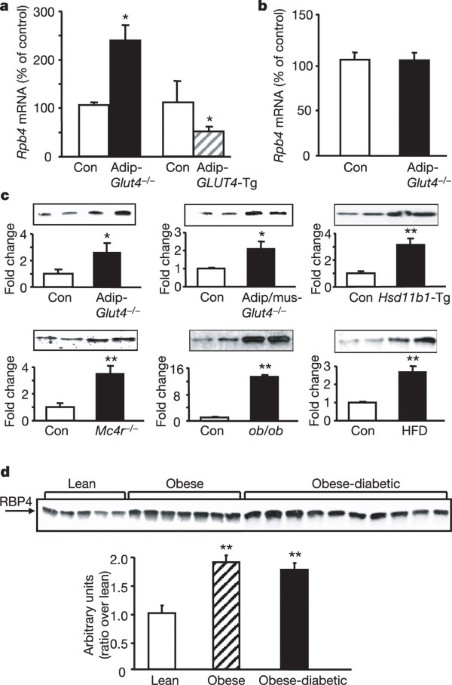 Serum retinol binding protein 4 contributes to insulin resistance in obesity and type 2 diabetes