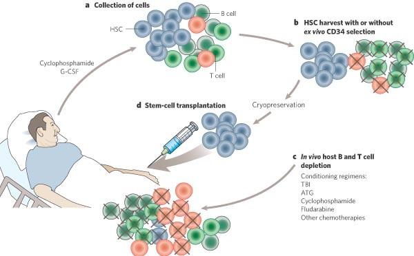 Treatment of severe autoimmune disease by stem-cell ...