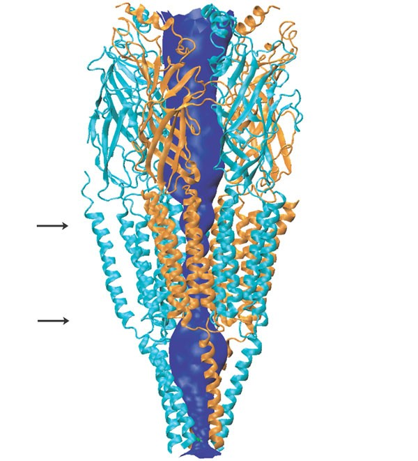 Recent Advances In Cys-loop Receptor Structure And