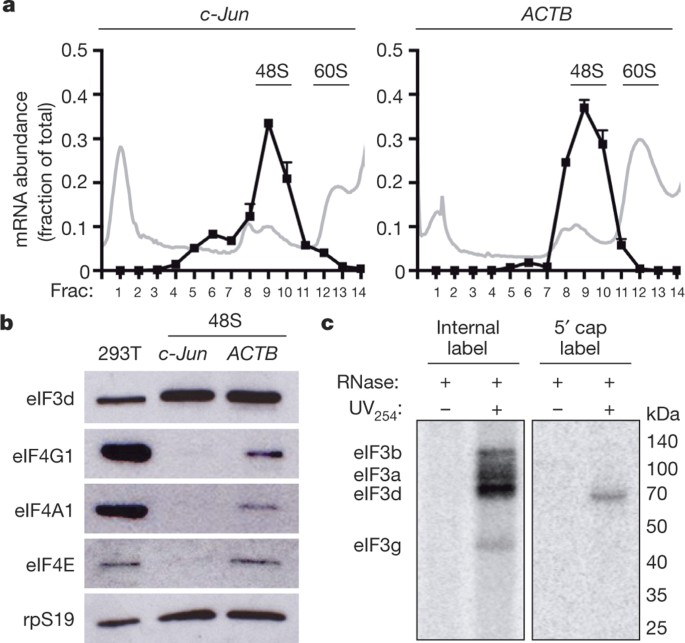 EIF3d Is An MRNA Cap-binding Protein That Is Required For
