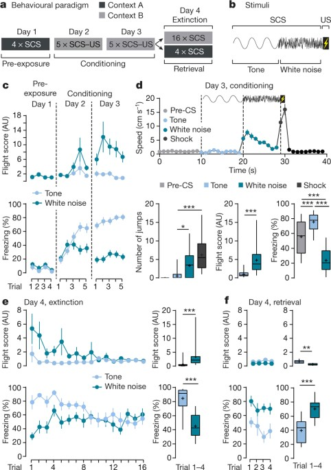 A Competitive Inhibitory Circuit For Selection Of Active And