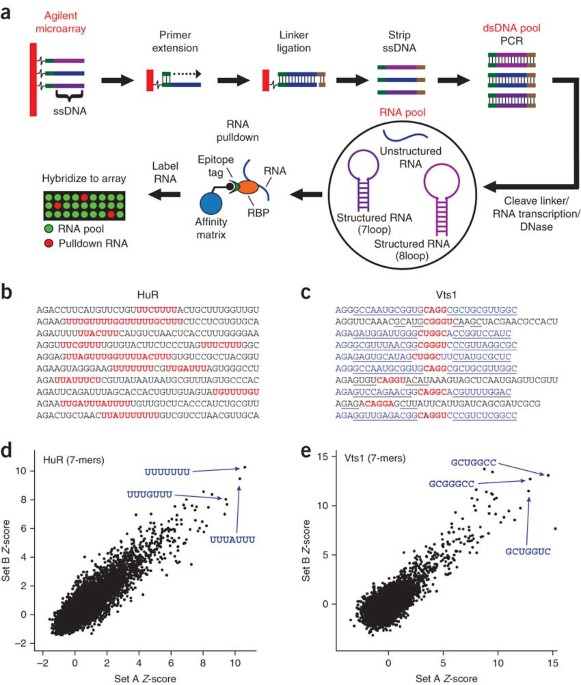 Rapid And Systematic Analysis Of The RNA Recognition