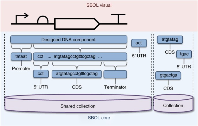 The Synthetic Biology Open Language (SBOL) provides a community standard for communicating designs in synthetic biology