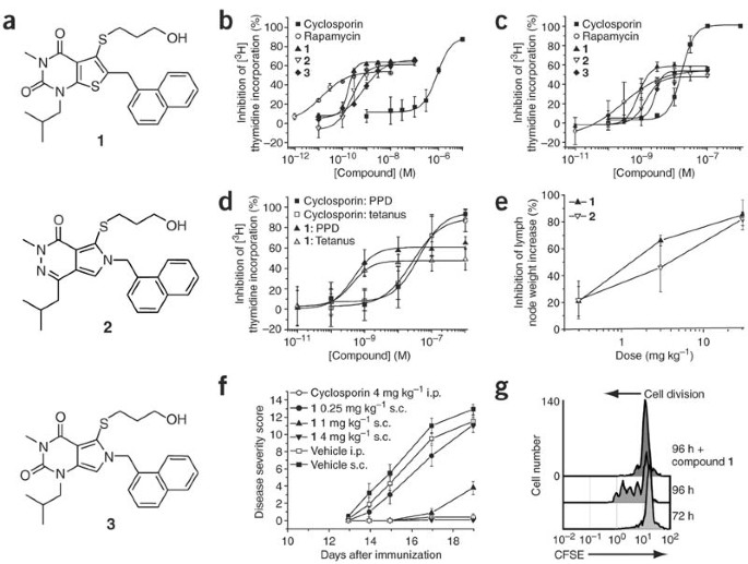 Monocarboxylate transporter MCT1 is a target for