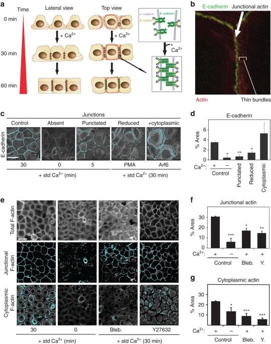 Defining functional interactions during biogenesis of