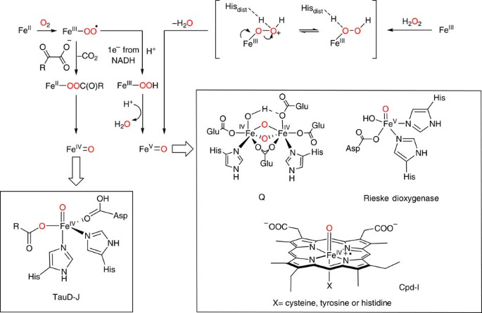 The Biology And Chemistry Of High Valent Iron Oxo And Iron Nitrido Complexes Nature Communications