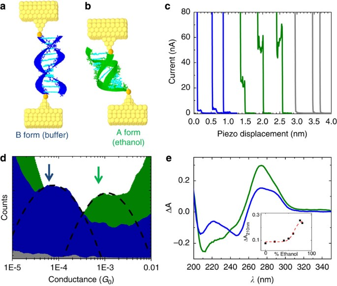 Conformational Gating Of Dna Conductance Nature Communications