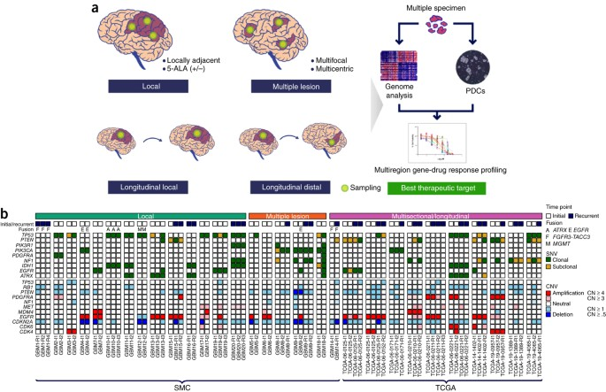 Spatiotemporal genomic architecture informs precision oncology in