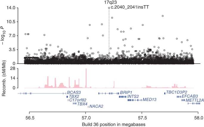 Mutations In Brip1 Confer High Risk Of Ovarian Cancer Nature Genetics