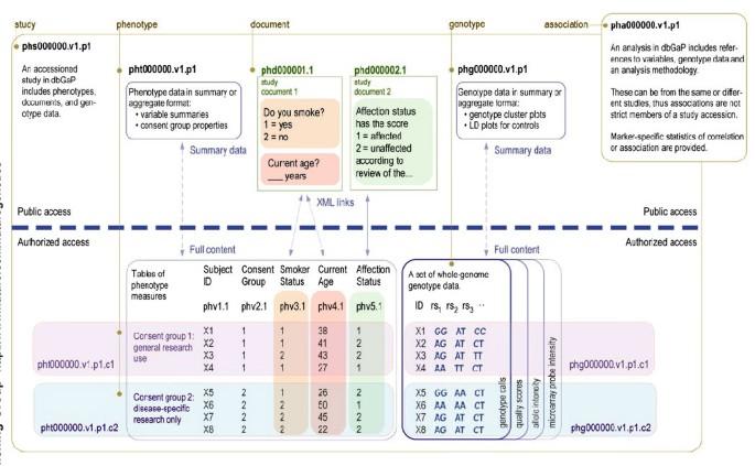 The Ncbi Dbgap Database Of Genotypes And Phenotypes Nature Genetics