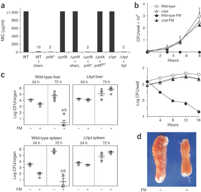 Coexpression of virulence and fosfomycin susceptibility in