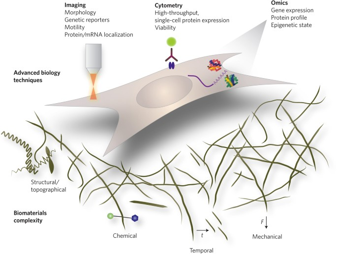 Leveraging advances in biology to design biomaterials