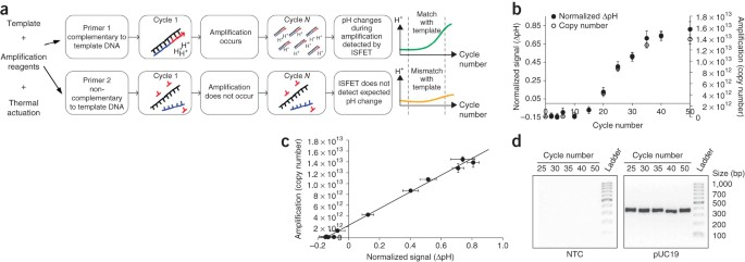 Simultaneous DNA amplification and detection using a pH