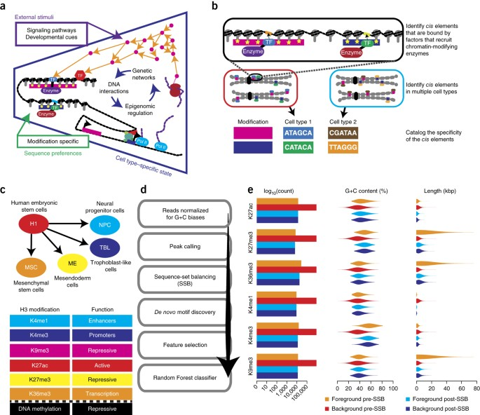 Predicting The Human Epigenome From DNA Motifs