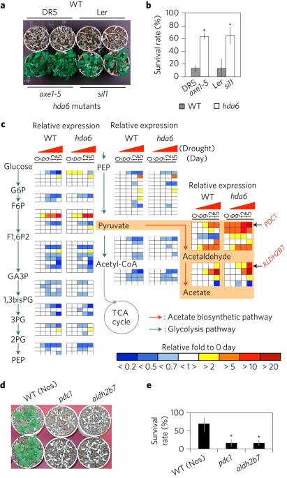 Acetate Mediated Novel Survival Strategy Against Drought In Plants