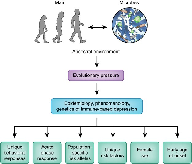 Pathogen Host Defense In The Evolution Of Depression Insights