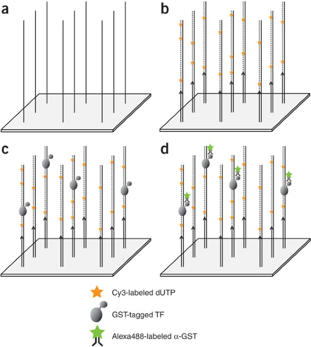 Universal Protein-binding Microarrays For The