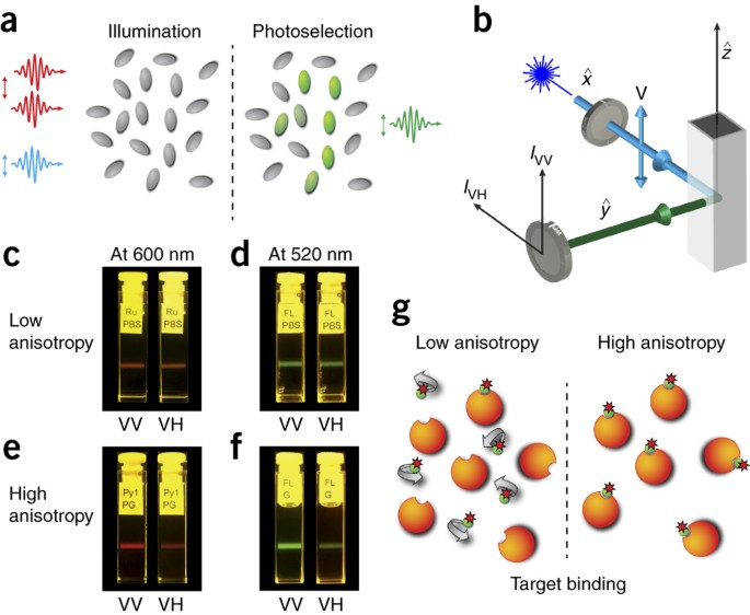Measurement Of Drug Target Engagement In Live Cells By Two Photon