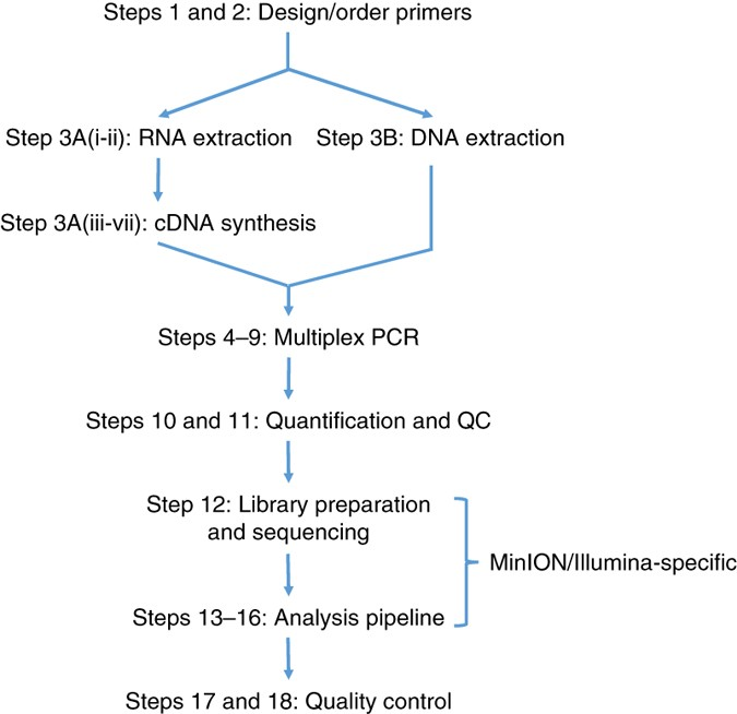 Multiplex Pcr Method For Minion And Illumina Sequencing Of Zika And Other Virus Genomes Directly From Clinical Samples Nature Protocols