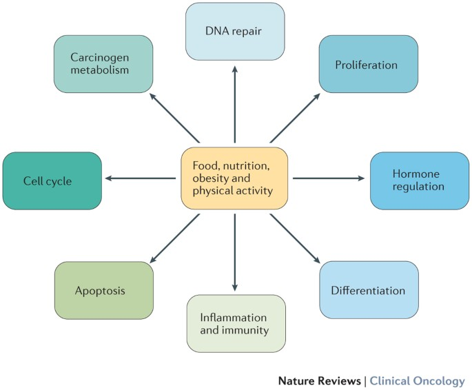 hormonal cancer nutrition oncocytic papilloma