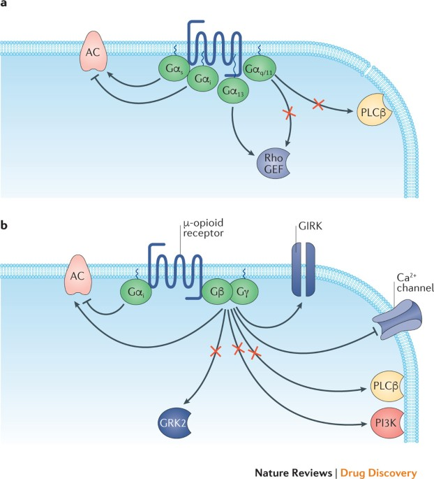 Targeting G Protein-coupled Receptor Signalling By