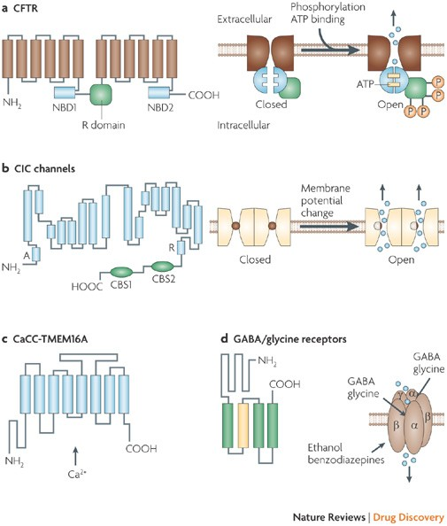 Chloride channels as drug targets   Nature Reviews Drug Discovery