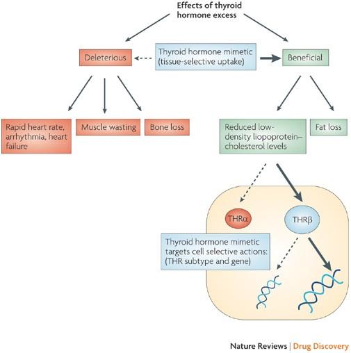 Thyroid Hormone Mimetics Potential Applications In