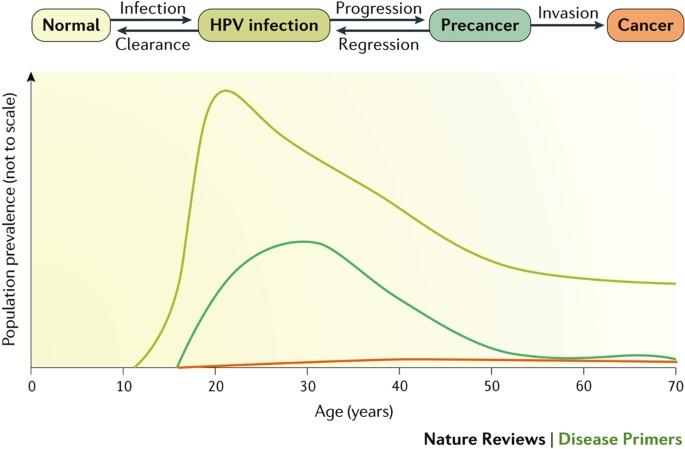 human papillomavirus infection latency)