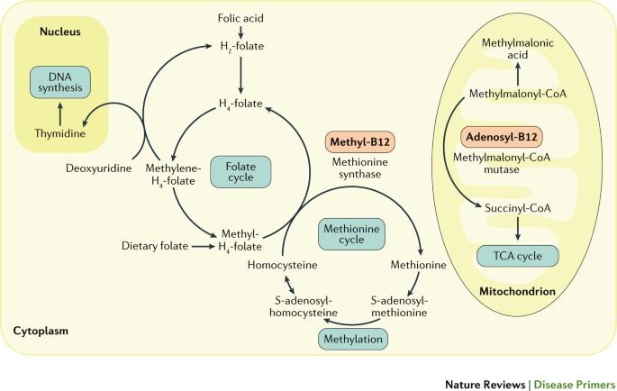 Vitamina B Cauze, deficit, simptome, contraindicatii, preventie | kozossegikartya.ro | kozossegikartya.ro