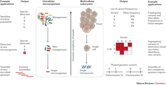 Single-cell genome sequencing: current state of the science ...
