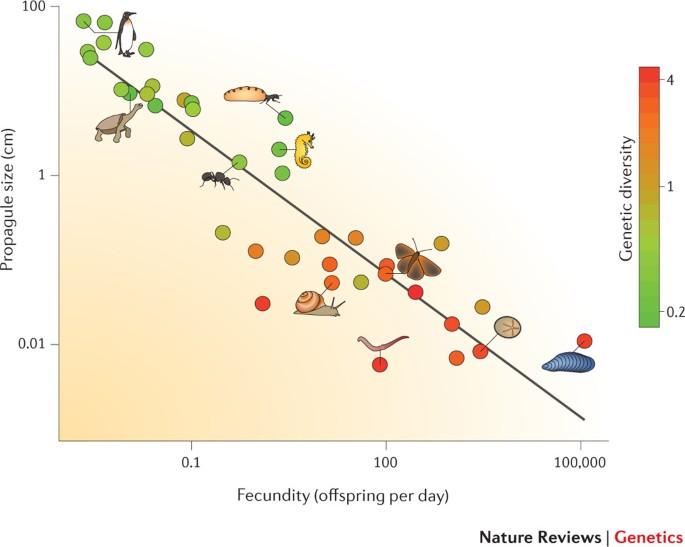 Determinants Of Genetic Diversity