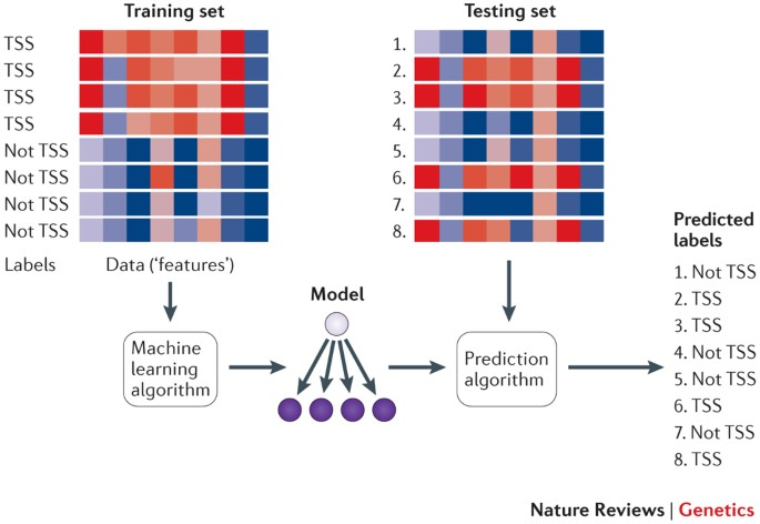 Machine learning applications in genetics and genomics   Nature Reviews  Genetics