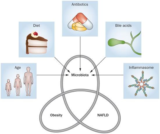 Boala ficatului gras: cauze, simptome, tratament - Ciroză Dysbiosis nafld