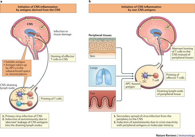 T Cell Responses In The Central Nervous System Nature Reviews Immunology