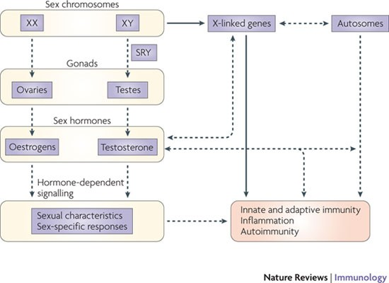 The X chromosome in immune functions: when a chromosome makes the difference