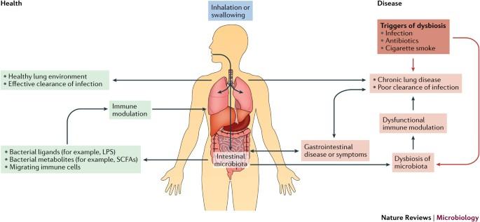 dysbiosis lungs
