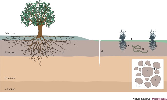 The Soil Thematic Strategy - Soil - Environment - European Commission | 410x685