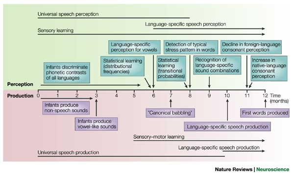 Early language acquisition: cracking the speech code