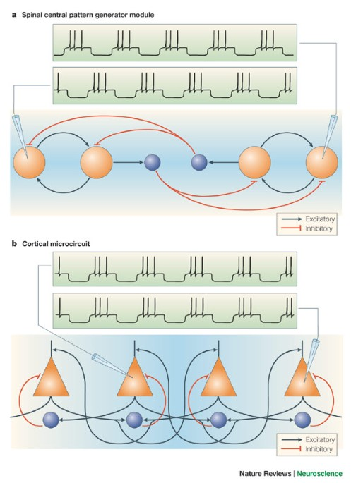 The cortex as a central pattern generator | Nature Reviews