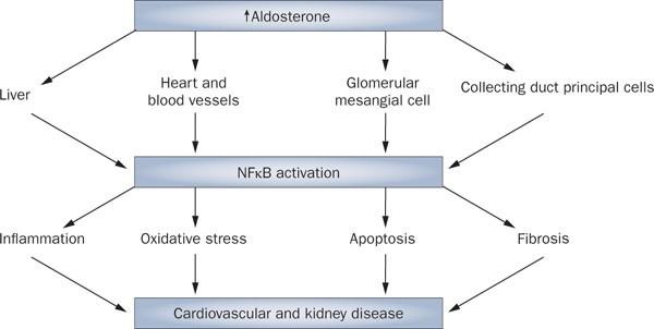 Limitations Of Angiotensin Inhibition