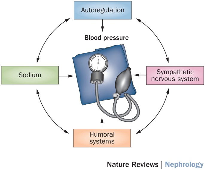 Management Of Hypertension In Chronic Kidney Disease Nature Reviews Nephrology