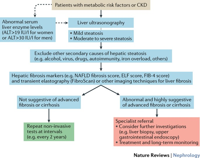 Non Alcoholic Fatty Liver Disease An Emerging Driving Force In Chronic Kidney Disease Nature Reviews Nephrology