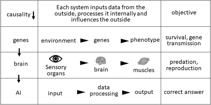 Genes, the brain, and artificial intelligence in evolution