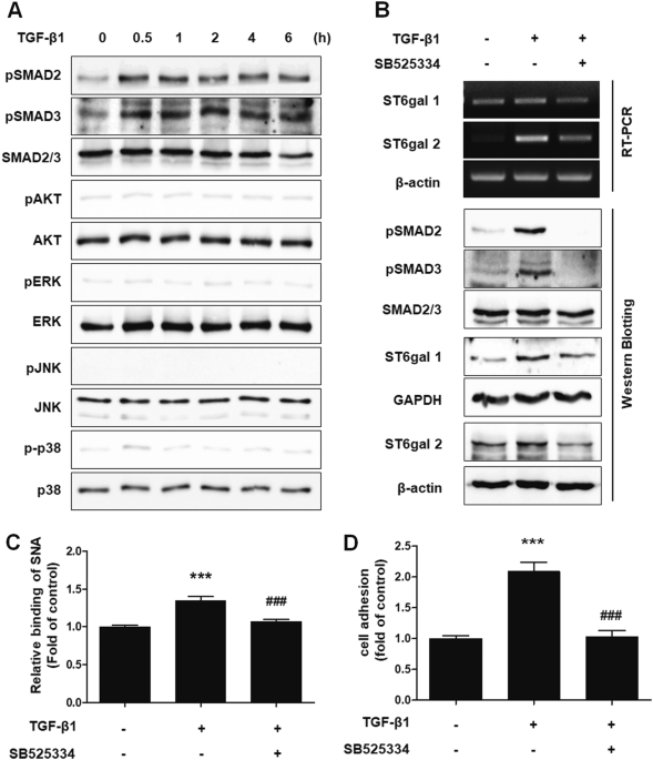 Increased α2-6 sialylation of endometrial cells contributes to the development of endometriosis