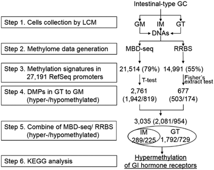 Whole genome MBD-seq and RRBS analyses reveal that